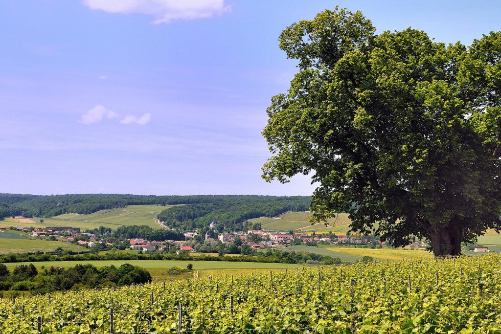 Шампань-Арденны (Champagne-Ardenne)