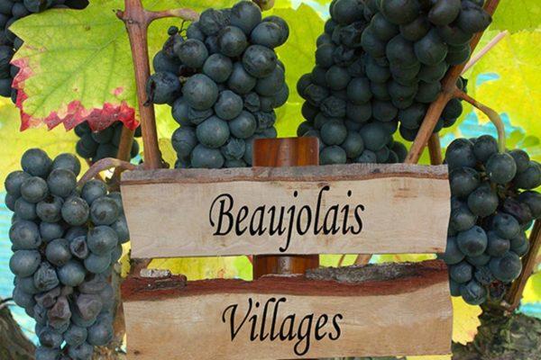 Виноградники Бургундии и Божоле