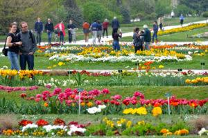 Сад растений в Париже Jardin des plantes