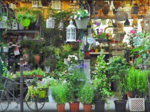 Цветочный рынок в Иль-де-Сите