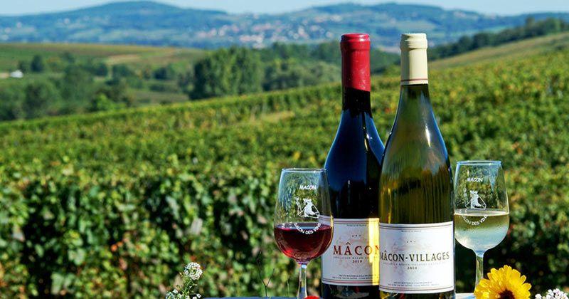 Вино Бургундия красное сухое