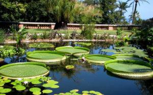 Ботанический сад Ментона