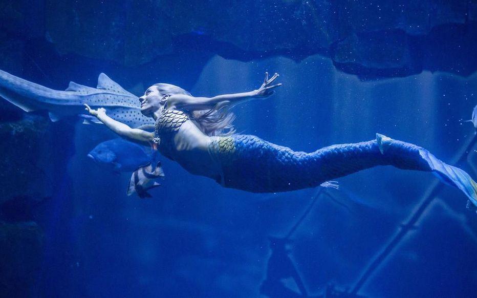 Русалка Клер в Парижском океанариуме